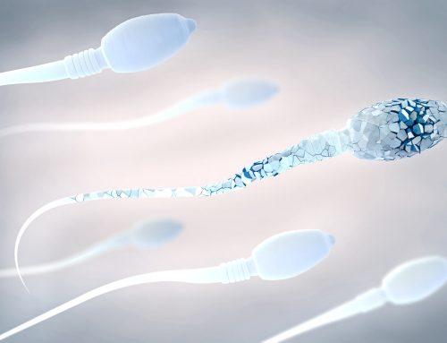 Eine Studie zeigt, dass Veränderungen in manchen Spermienproteinen zu Fehlschlägen bei der Befruchtung führen